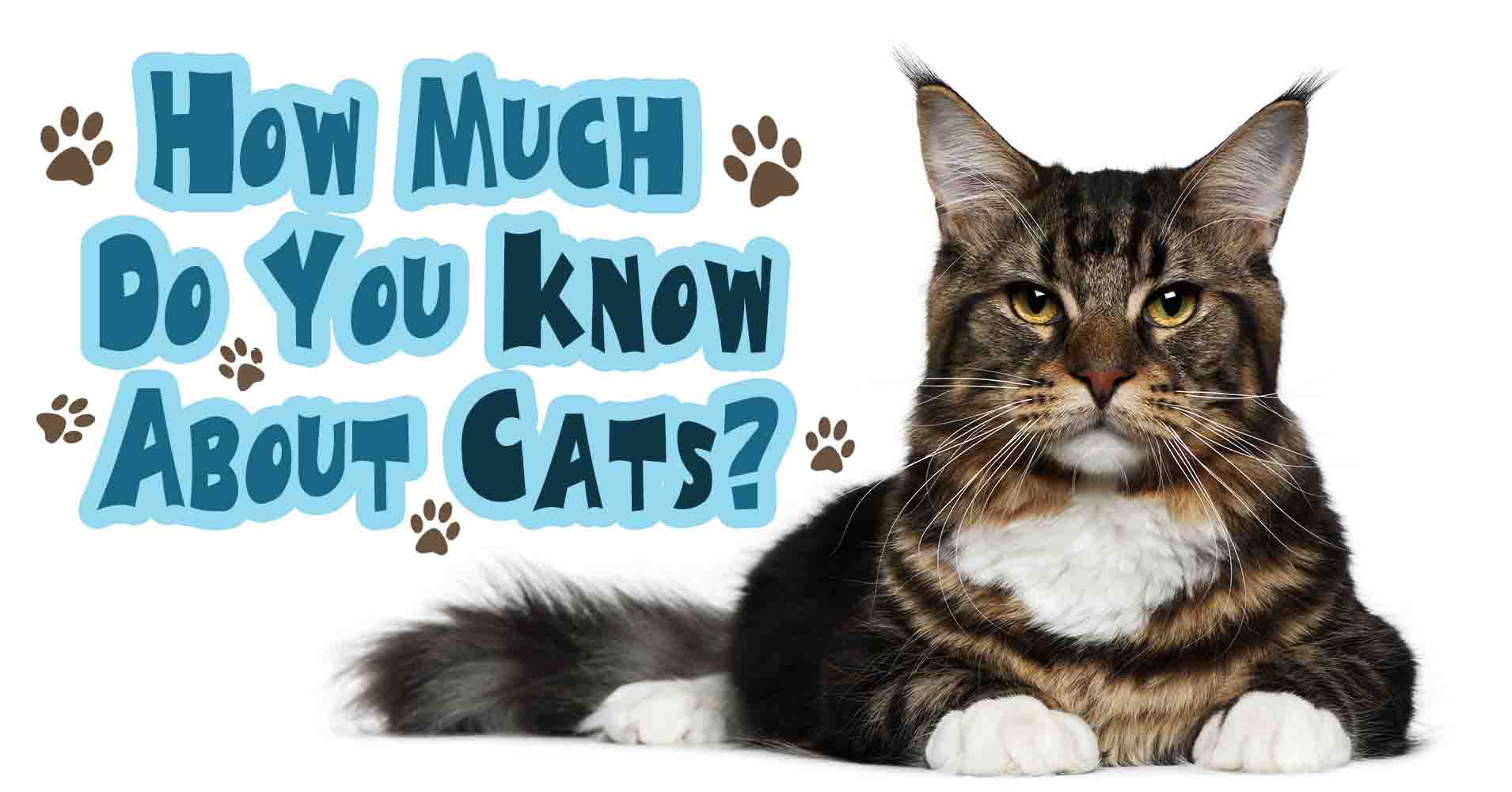 How much do you really know about cats