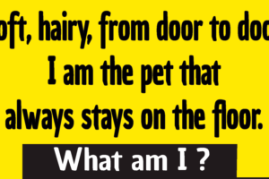 soft hairy from door to door riddle answer