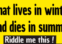 what lives in winter and dies in summer riddle answer