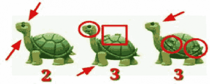 How many turtles do you see riddle ,How many turtles do you see riddle answer ,How many turtles do you see ,How many turtles do you see puzzle answer ,How many turtles do you see riddle explained