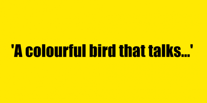 A colourful bird that talks - Riddle Answer