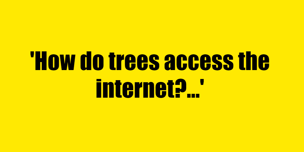 How do trees access the internet? - Riddle Answer