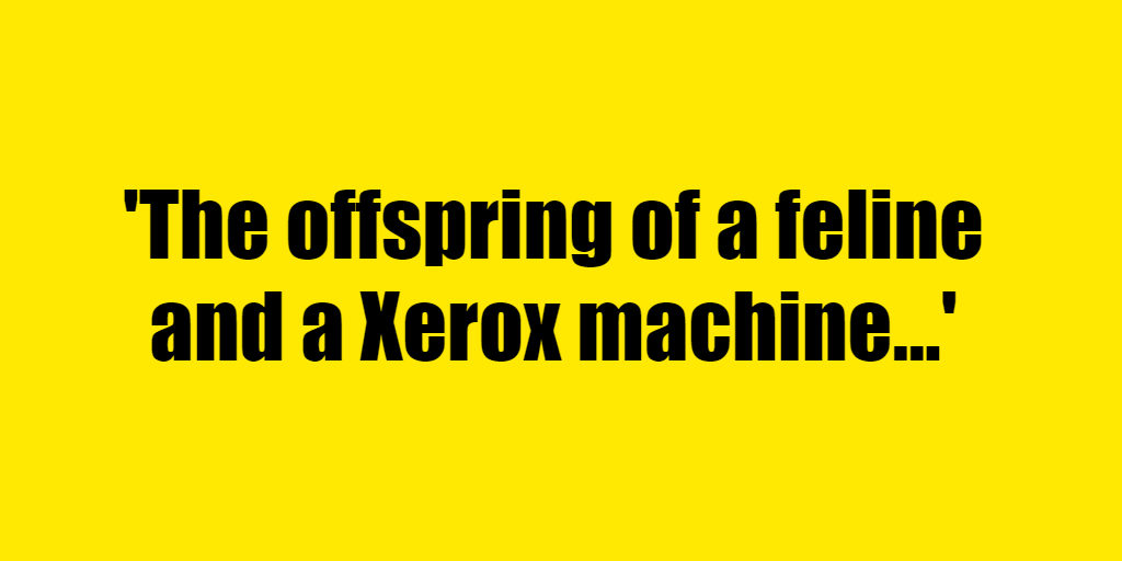 The offspring of a feline and a Xerox machine - Riddle Answer
