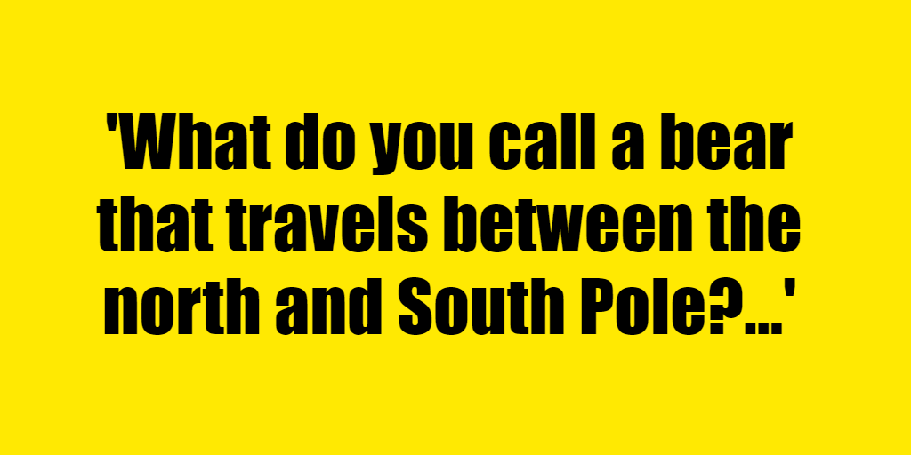 What do you call a bear that travels between the north and South Pole? - Riddle Answer
