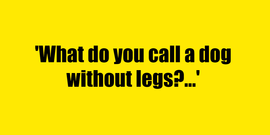 What do you call a dog without legs? - Riddle Answer