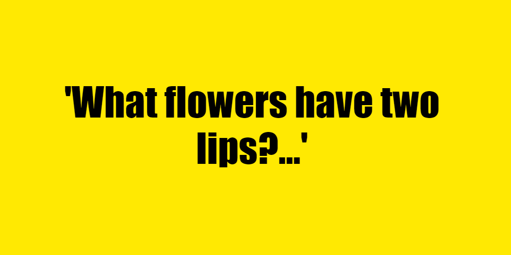 What flowers have two lips? - Riddle Answer