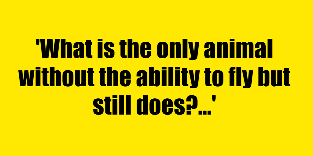 What is the only animal without the ability to fly but still does? - Riddle Answer