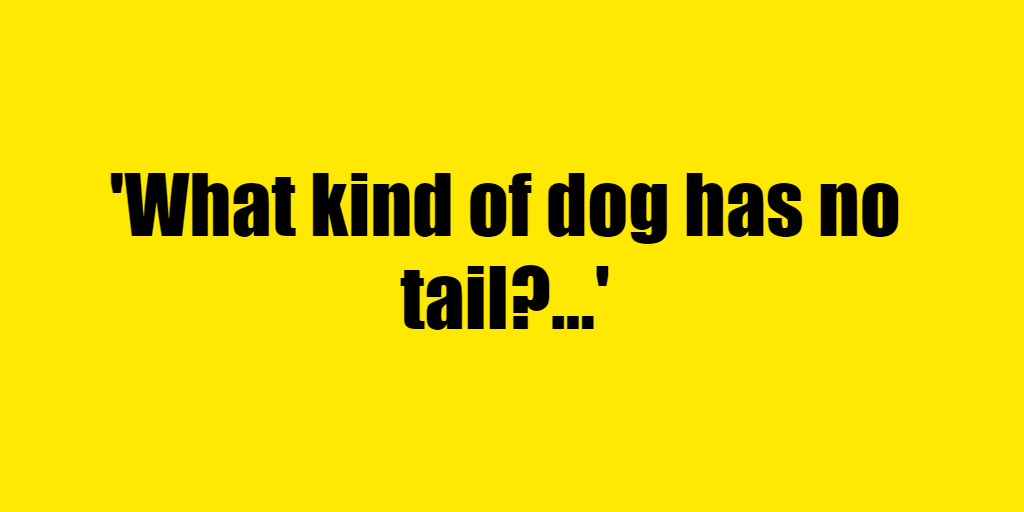 What kind of dog has no tail? - Riddle Answer